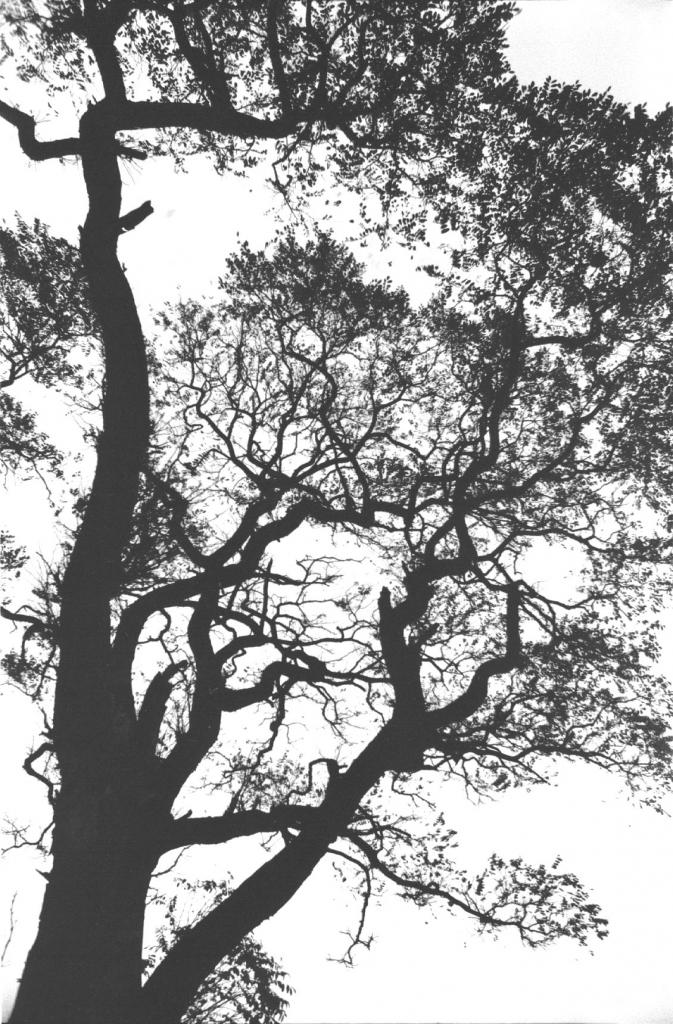 Égig érő fa