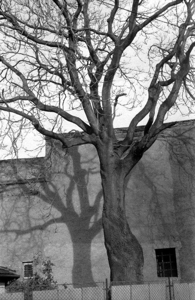 Városi életfa